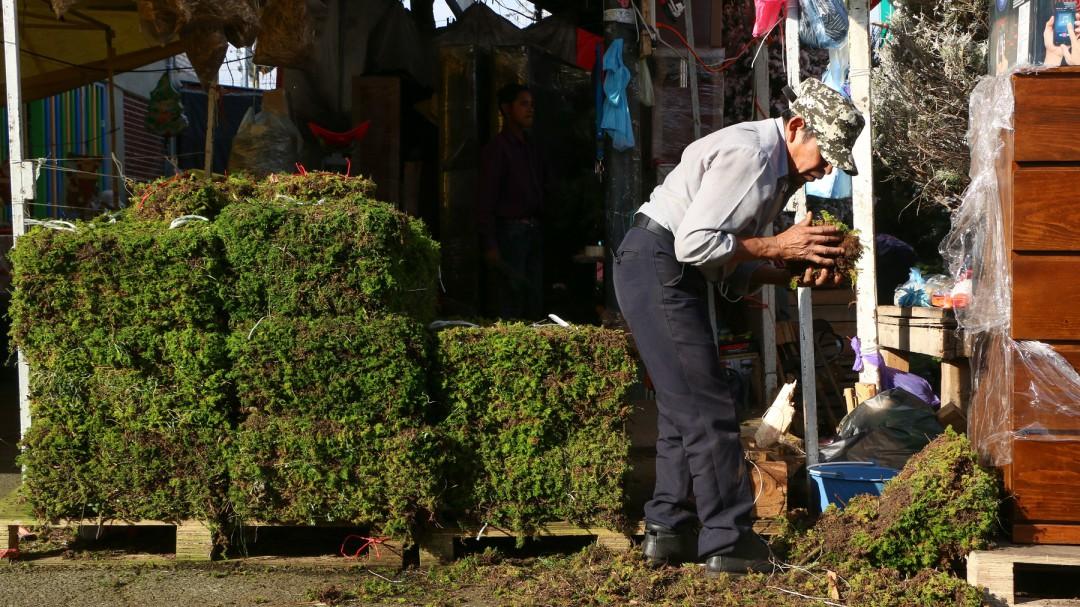SOPITAS: El uso de heno y musgo en los nacimientos es ilegal