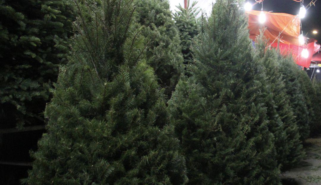 Profepa impide ingreso de mas de 5 mil árboles navideños provenientes de EU