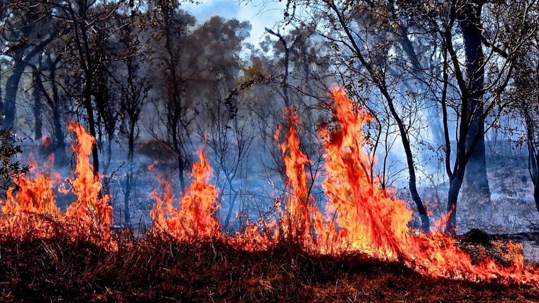 Incendios en Australia afectan todo el planeta: UNAM