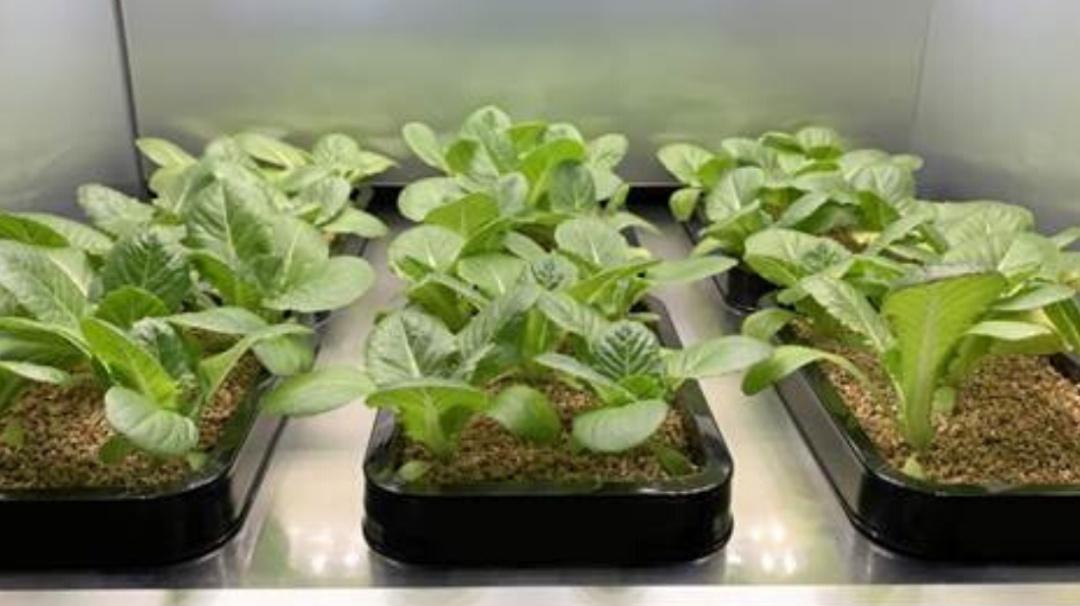 CES 2020: Cultiva vegetales en casa con este práctico electrodoméstico LG