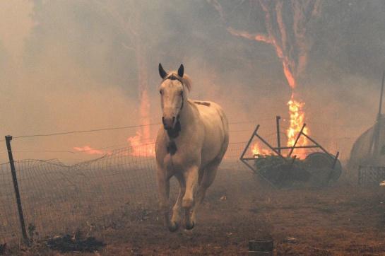 Las ráfagas de hasta 96 kilómetros por hora han sido el combustible fatal para el fuego