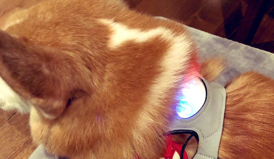CES 2020: ¿Tu perrito está feliz o triste? Chaleco indica sus sentimientos