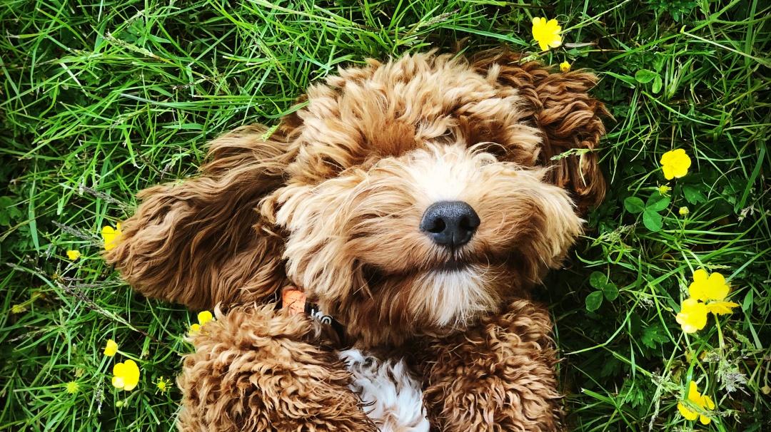 ¿Cómo entender a mi perro?