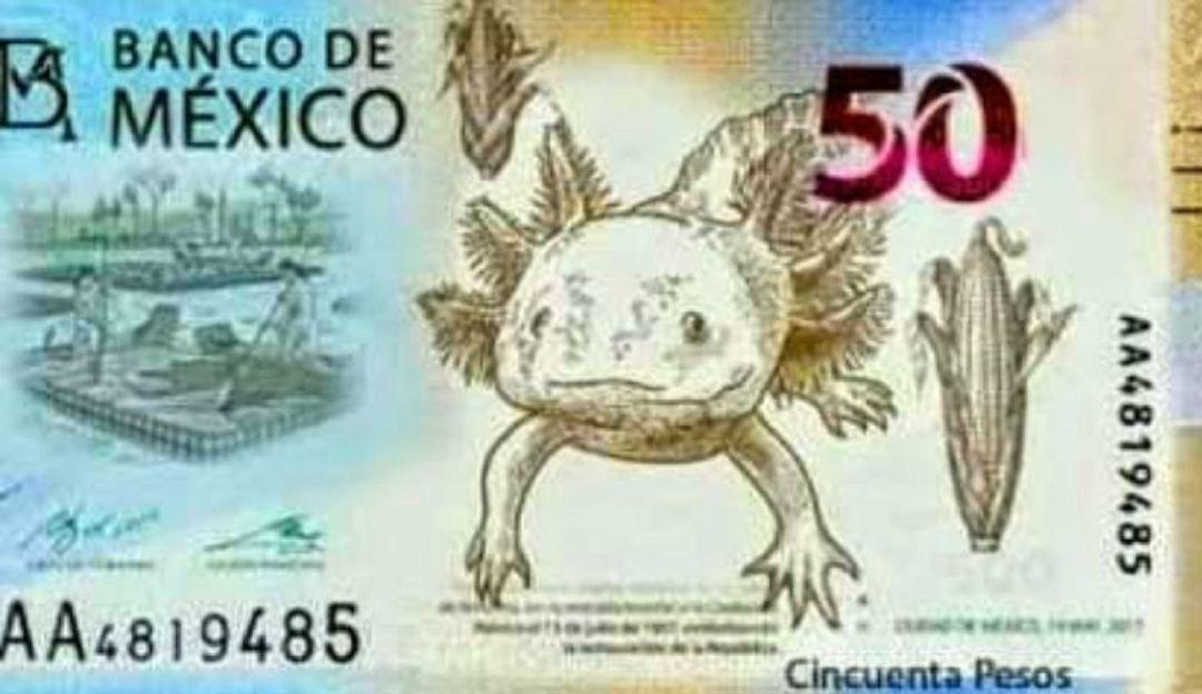 Billete de 50 pesos tendrá al ajolote, especie originaria de México