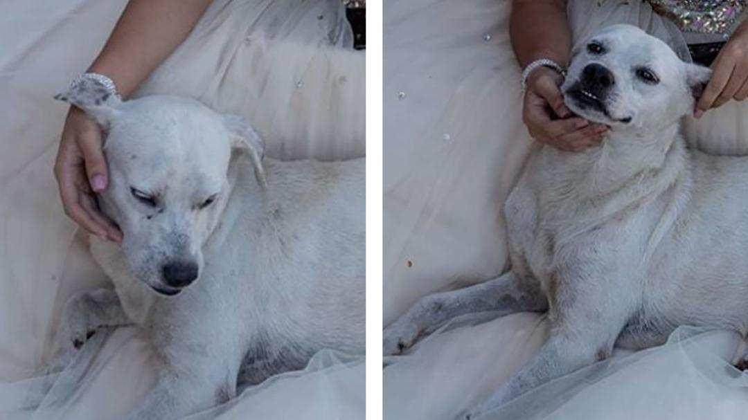 Perrito se mete en las fotos de una quinceañera y se vuelve viral