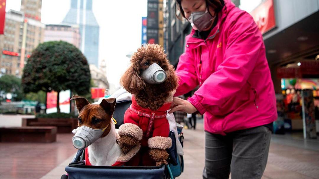 Perro da positivo a coronavirus en Hong Kong