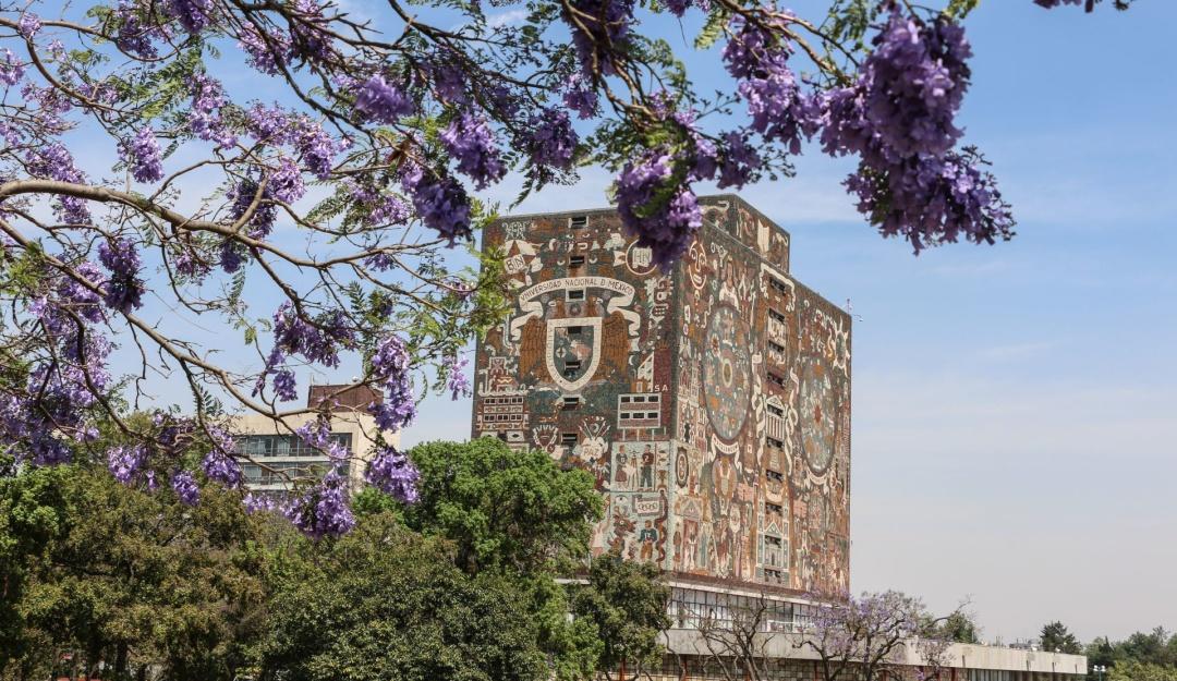 Analiza UNAM impartir clases en línea y suspender actividades masivas