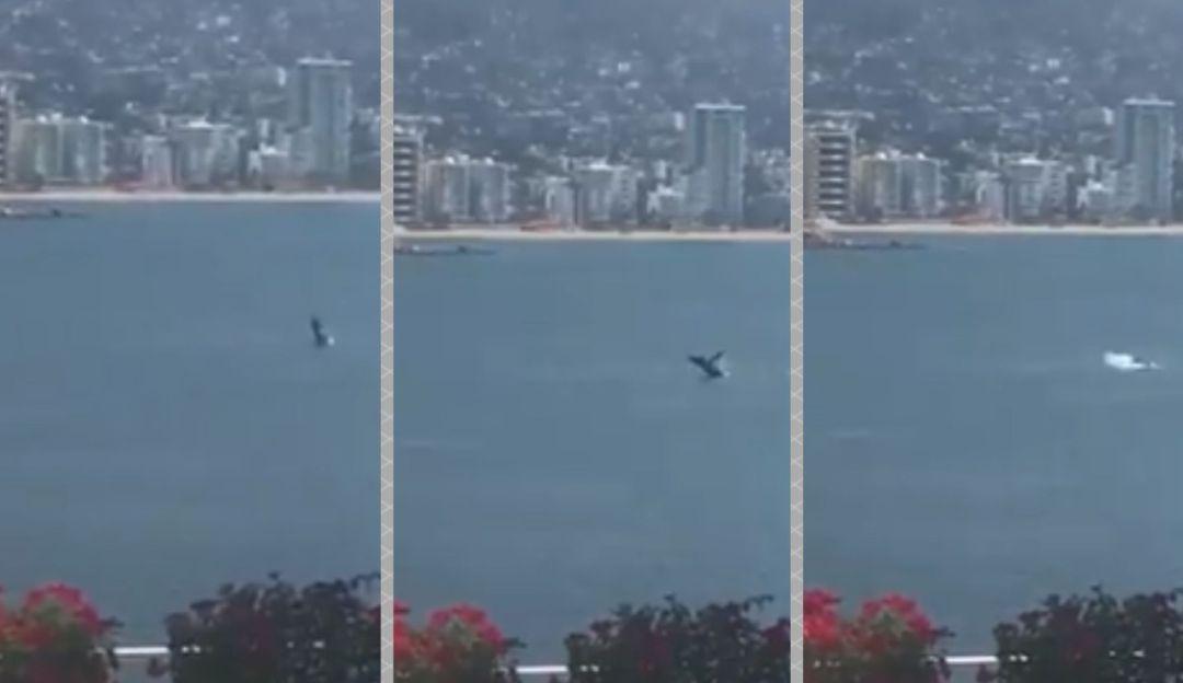 Captan a ballena en el puerto de Acapulco tras ausencia de turistas