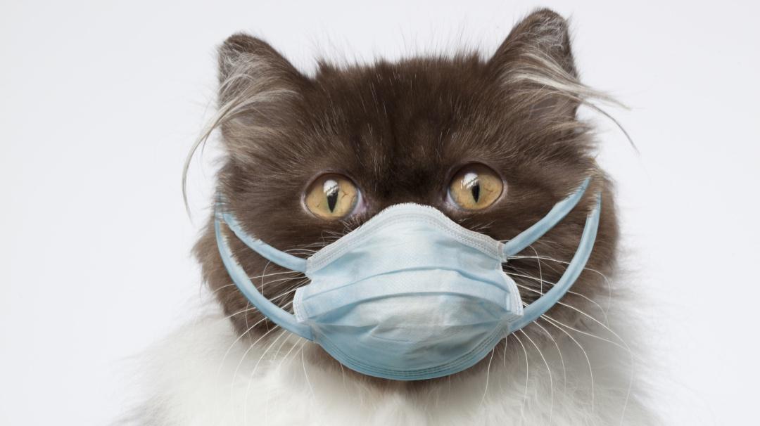 ¿Los gatos pueden contagiarse de coronavirus?