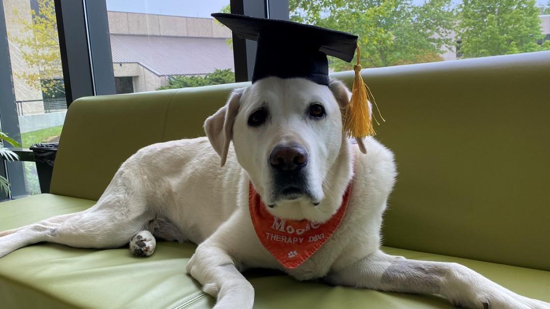 Moose, el perrito de terapia que recibió doctorado por la Universidad