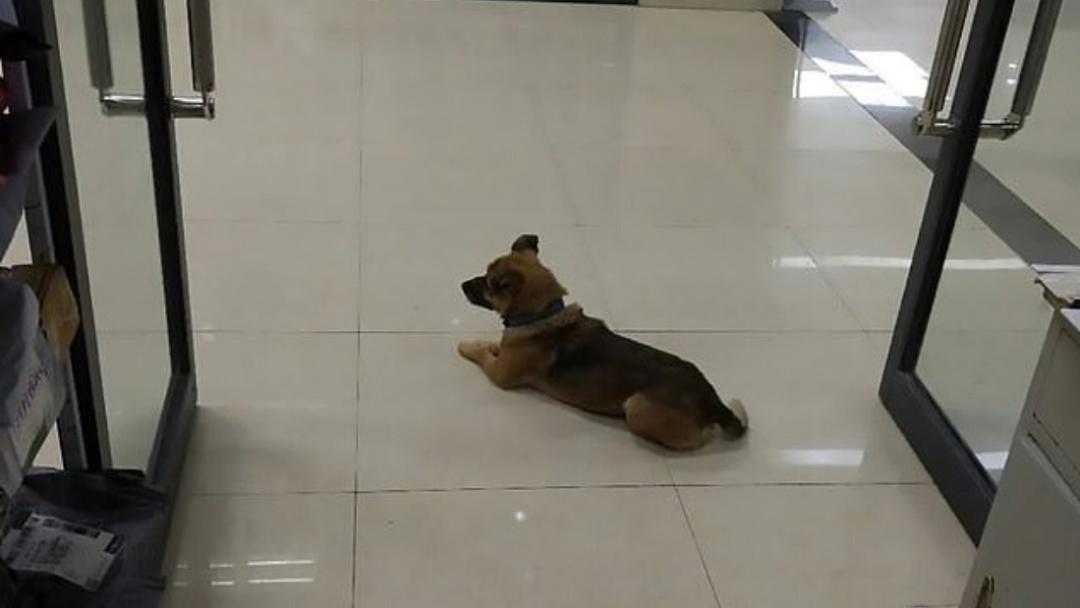 Perro espera por meses en un hospital a su dueño que falleció por COVID-19