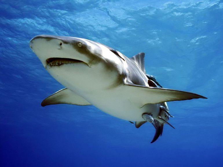 mentalidad de tiburón las 13 leyes pdf descargar