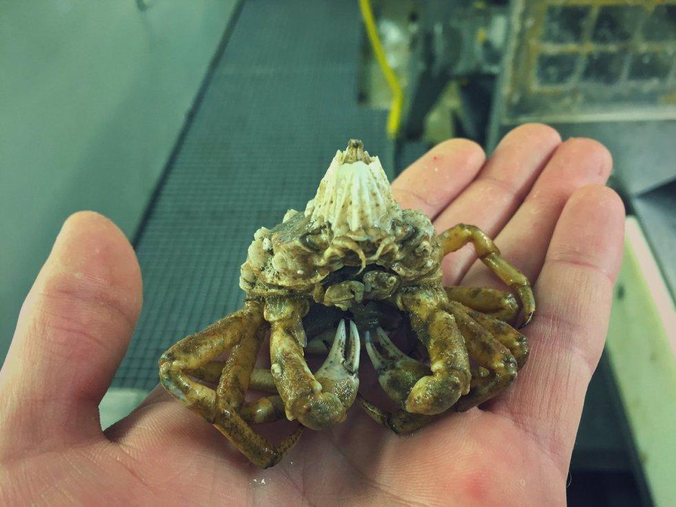 Pescador nos muestra los seres que viven al fondo del océano