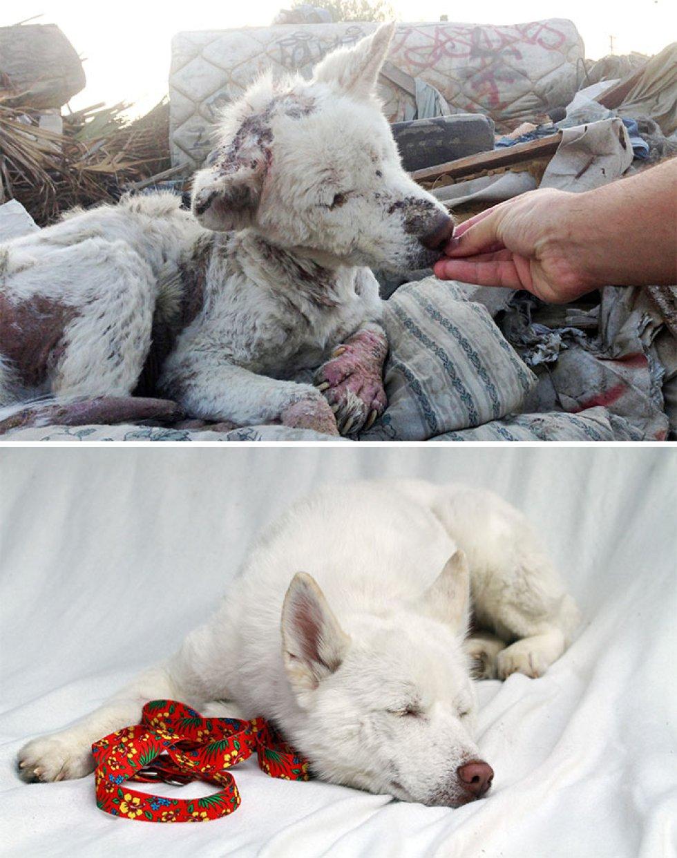 Miley vivía en la basura, tenía heridas severas y casi no podía andar. Ahora está sana y salva en su nuevo hogar