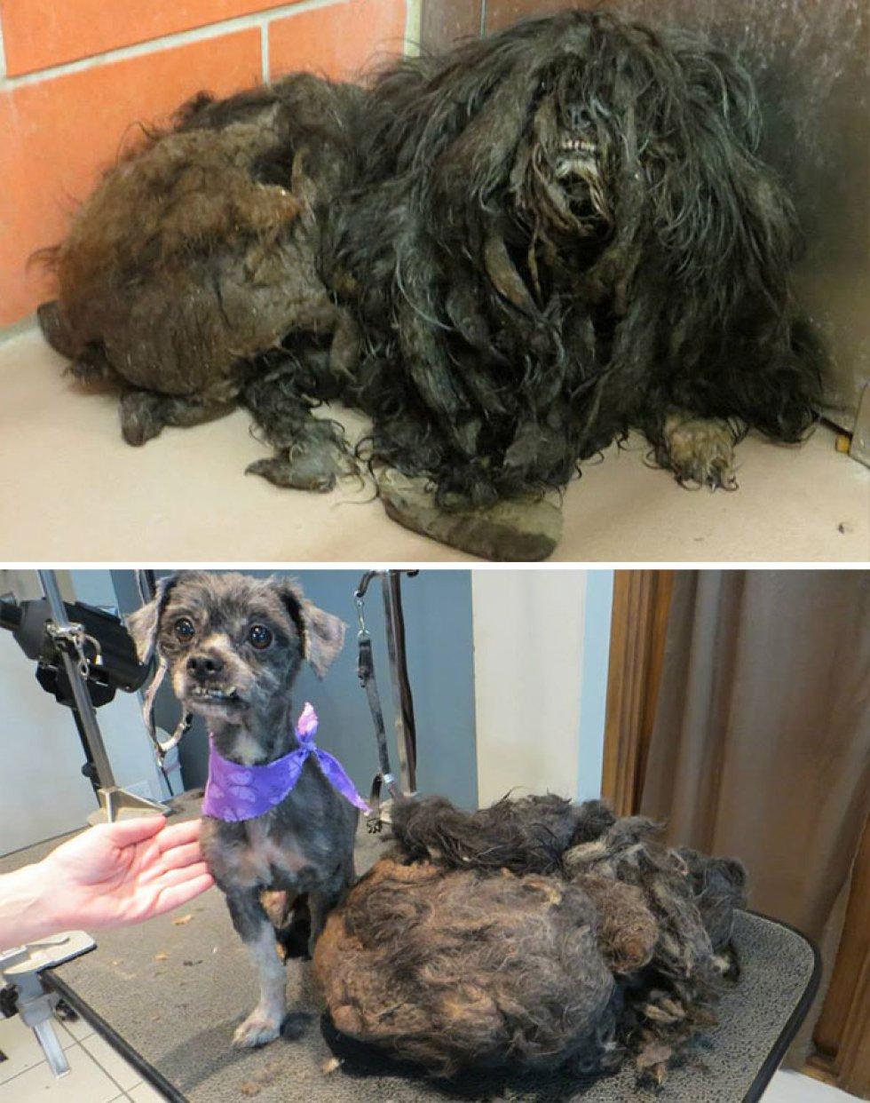 Se libró de 1 kilo de pelo y barro para comenzar su nueva vida