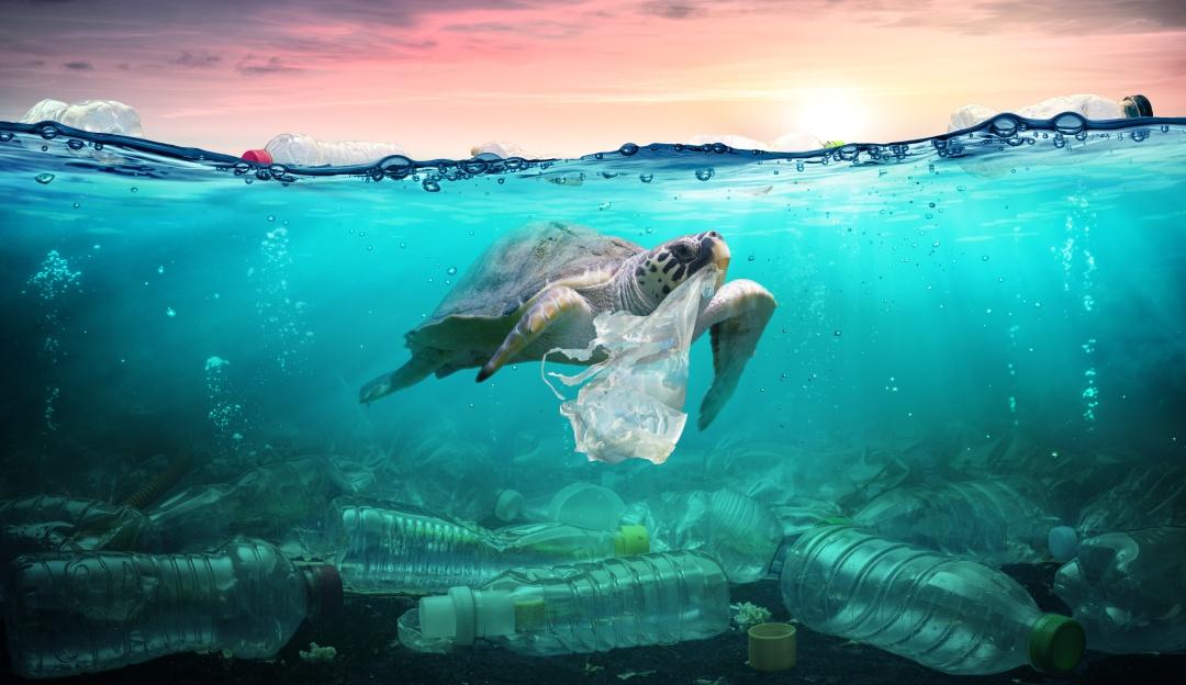La Contaminación por plástico en el mar afecta a estas especies | Sociedad  | W Radio Mexico