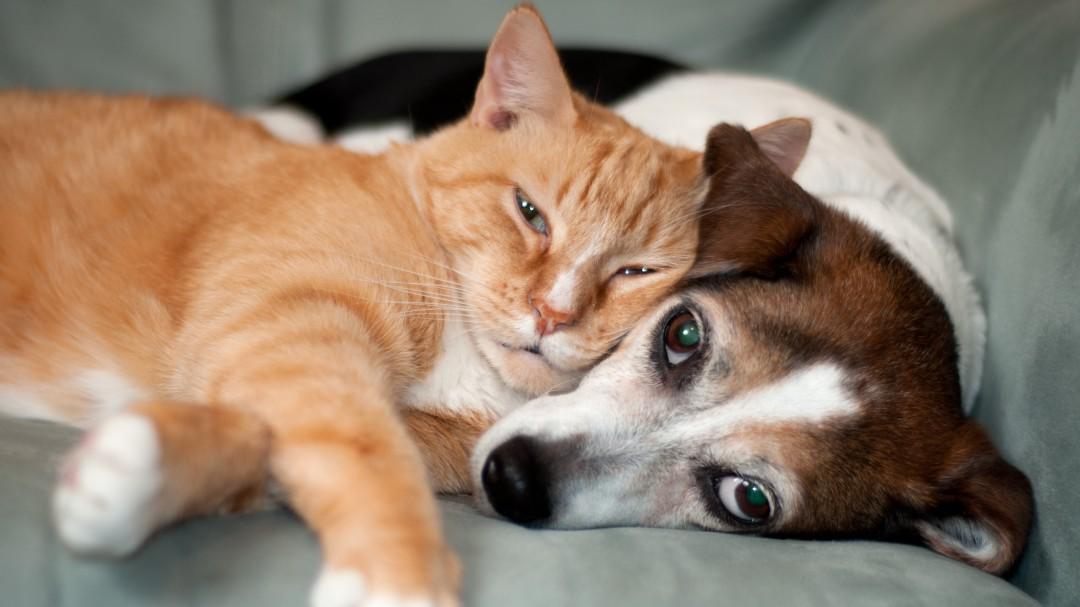 Crean CURP para mascotas; Así puedes registrar a tu perro o gato en la CDMX